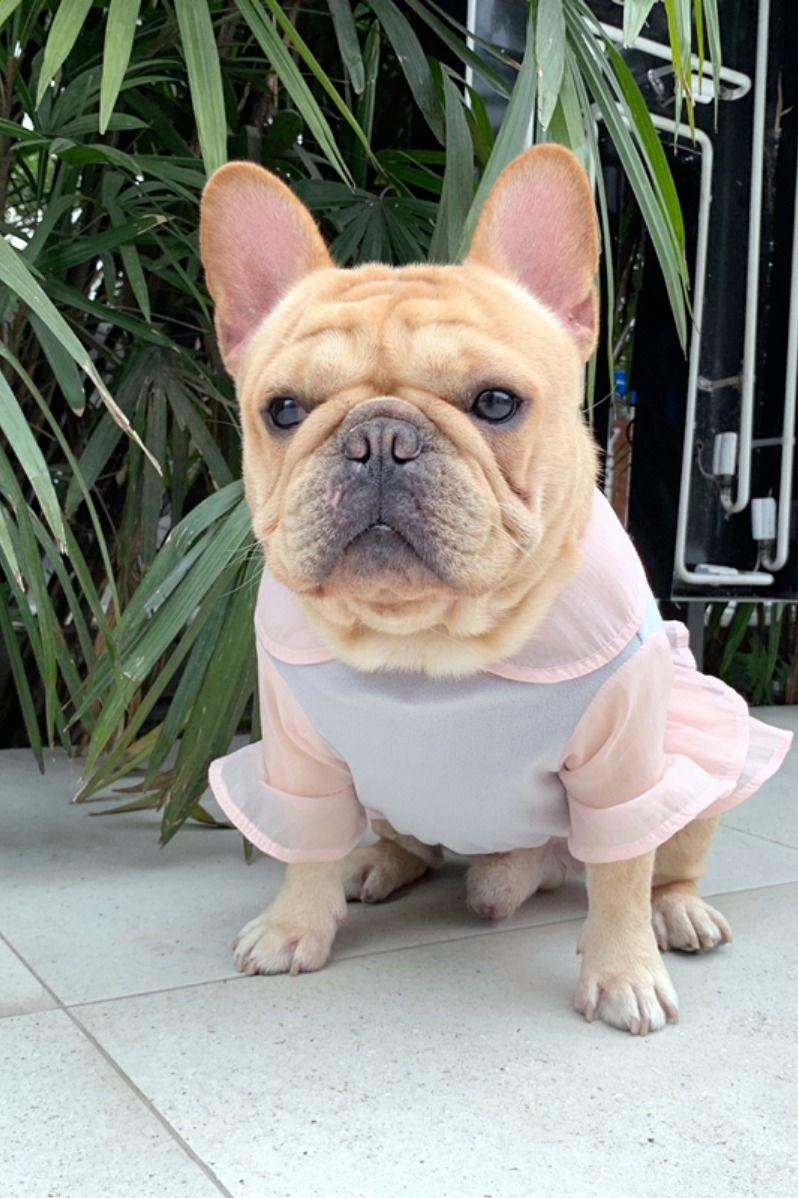 Dog Summer Dress for Female Medium Dogs