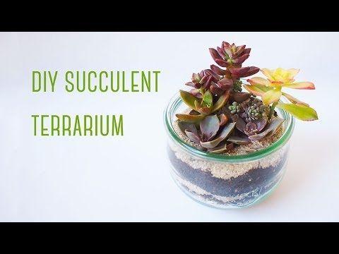 Diy Succulent Terrarium Succulent Terrarium Pinterest Terraria