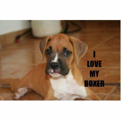 boxer love w pic fawn puppy cutout boxer puppy