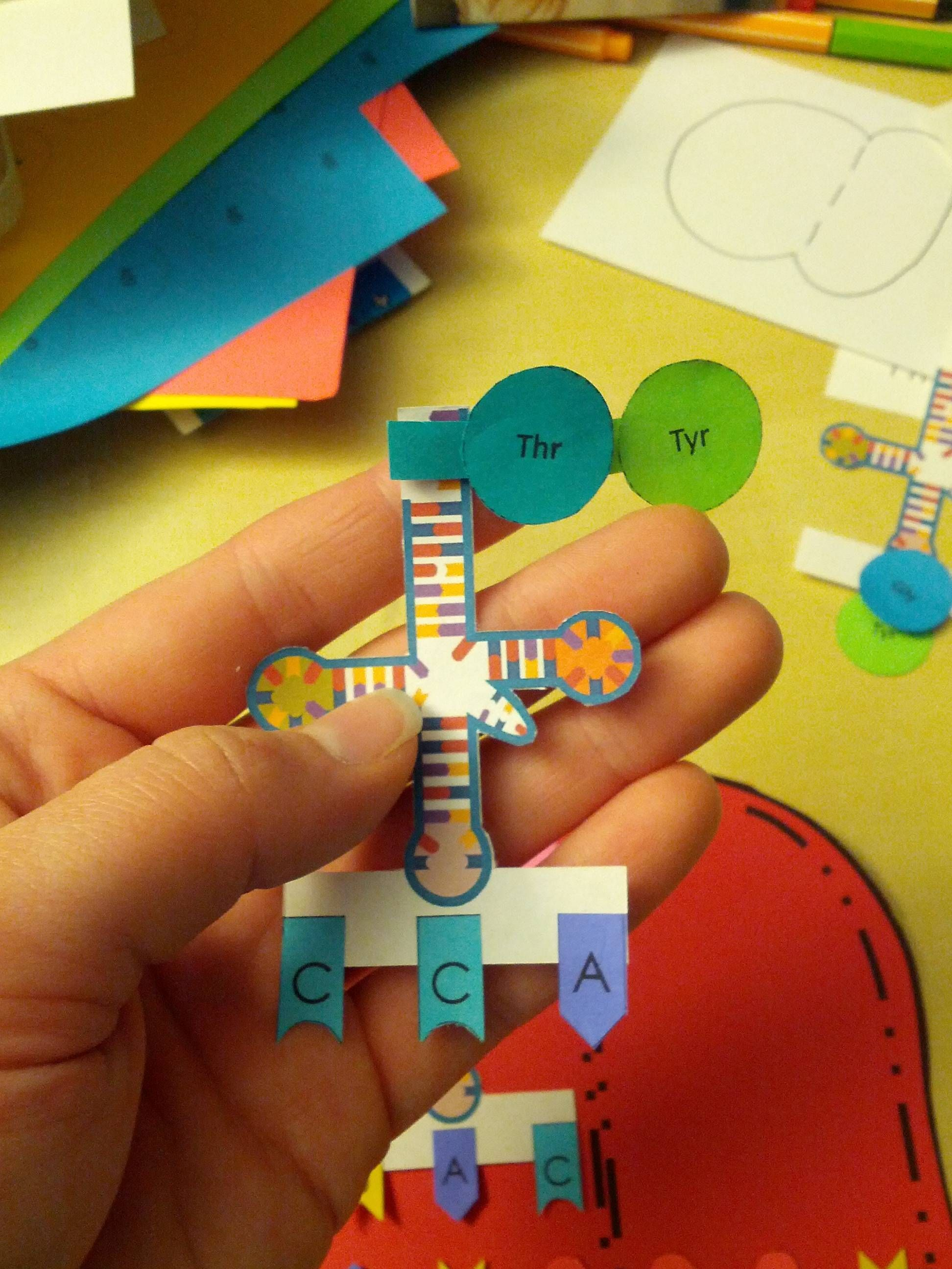 how to make a 3d dna model with paper