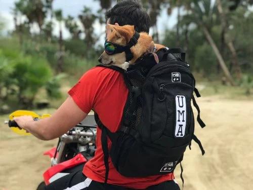 AIR PLUS Dog Backpack Carrier by K9 Sport Sack® Dog