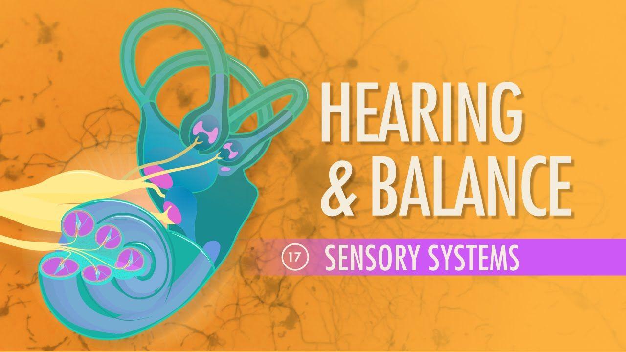 Hearing & Balance: A&P #17 | Nursing courses