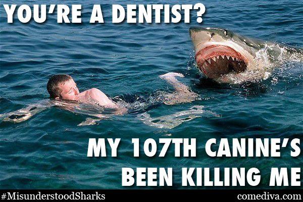 00381a79ea51abb0886f525421d6c0bd the misunderstood shark meme jaws! pinterest shark meme