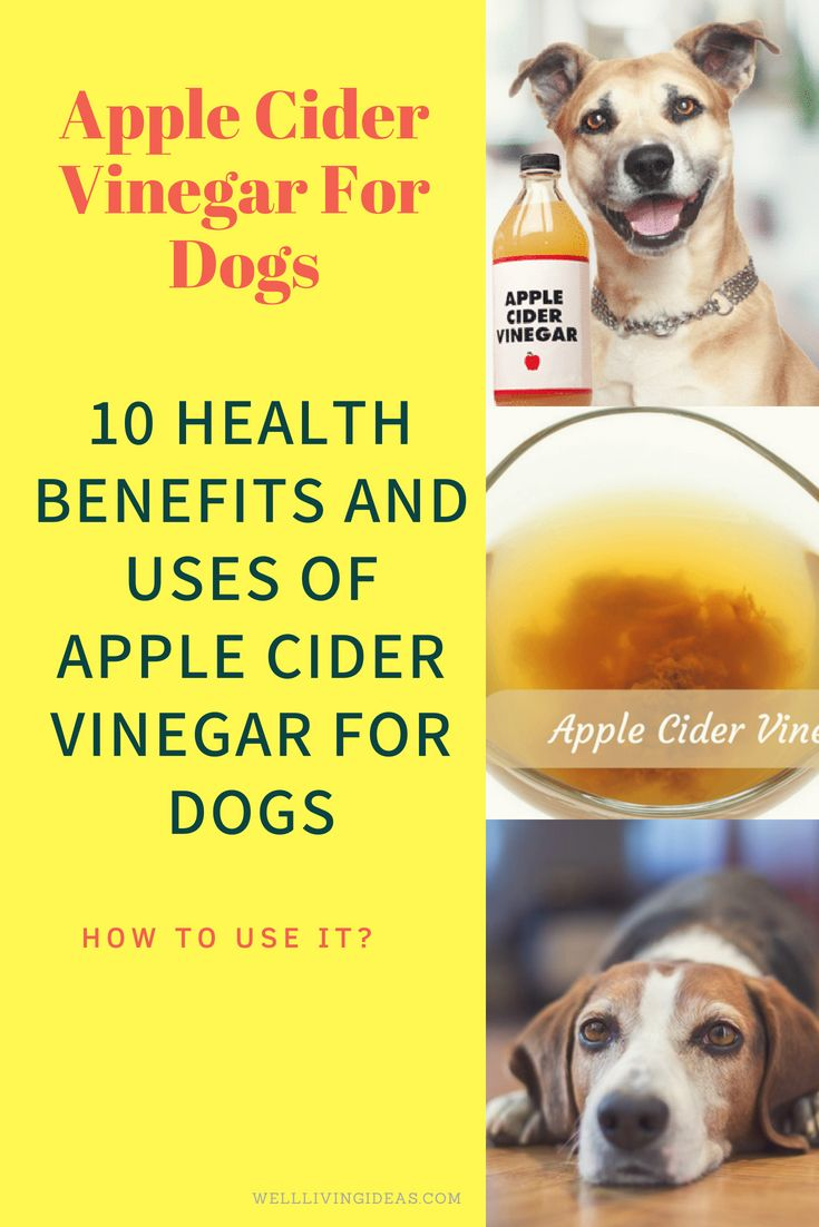 10 health benefits and uses of apple cider vinegar for dogs