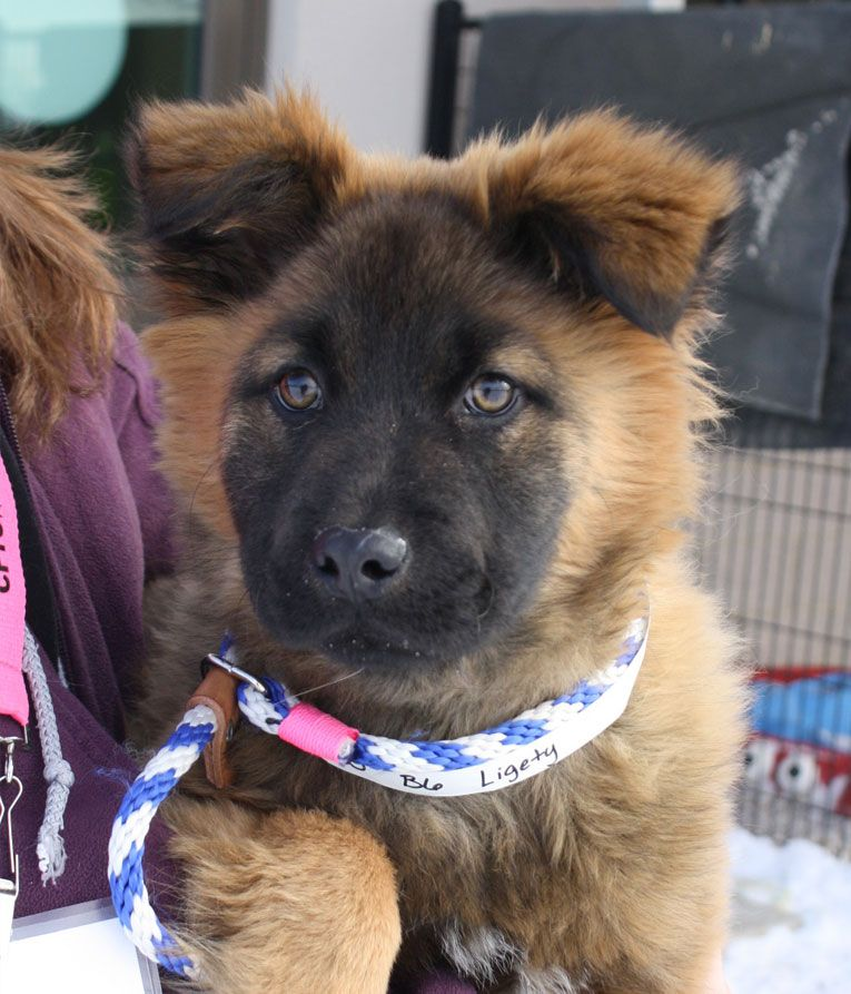 Franklin County Dog Shelter & Adoption Center (With images