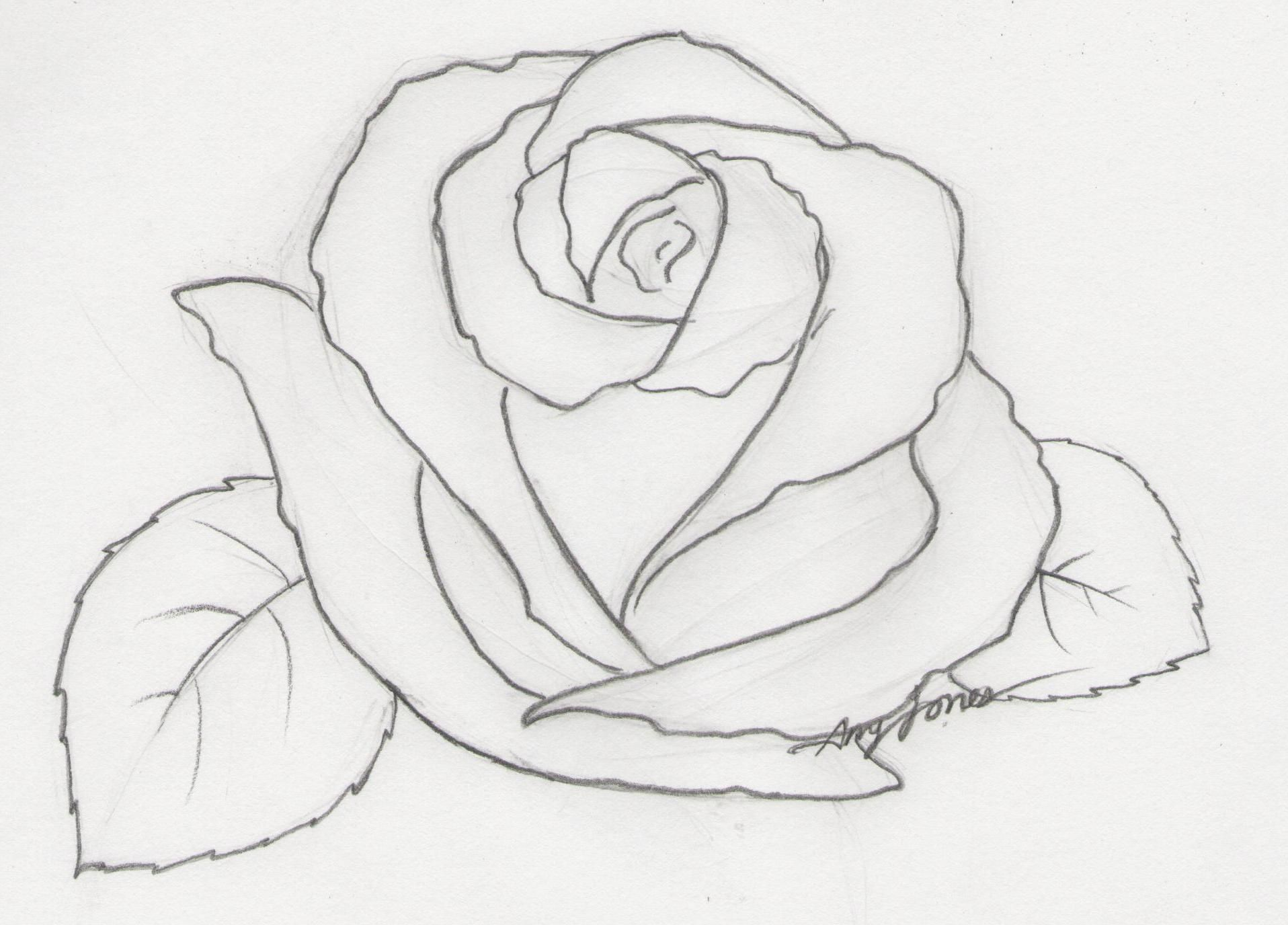 Easy Pencil Drawings Of Flowers Step By Roses Drawing