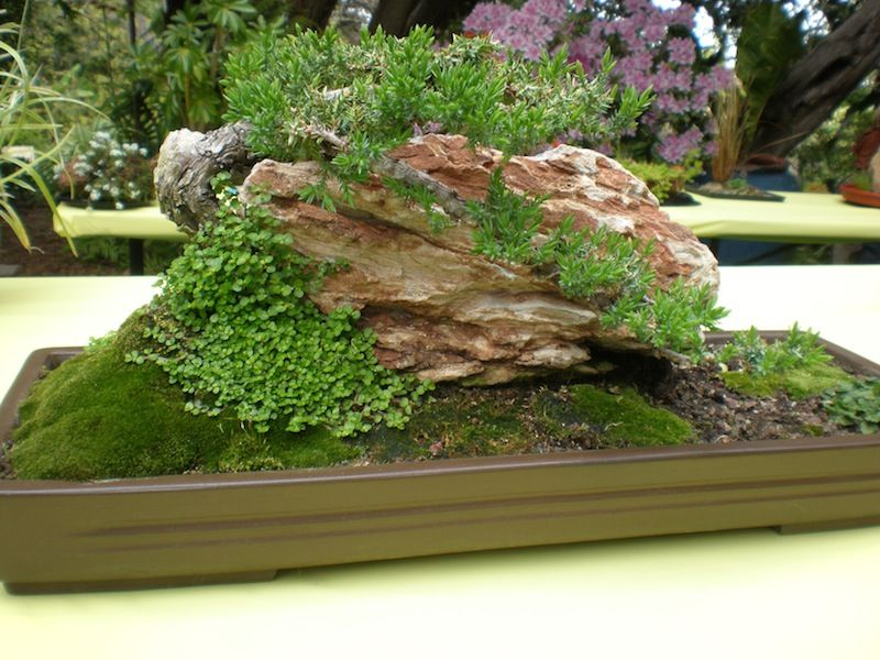 Moss Dish Garden The fern and mossery moss monday bonsai of the japanese