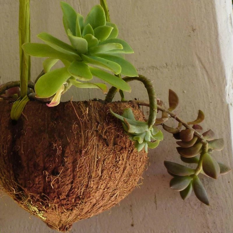pot suspendu en noix de coco couper la noix de coco en deux en enlevant juste un petit. Black Bedroom Furniture Sets. Home Design Ideas