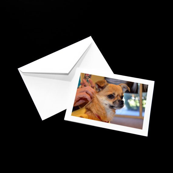 Chihuahua blank greeting cards photo greeting cards paper handmade chihuahua blank greeting cards photo greeting cards paper handmade greeting cards thank you cards dog card floppy ears gaze m4hsunfo