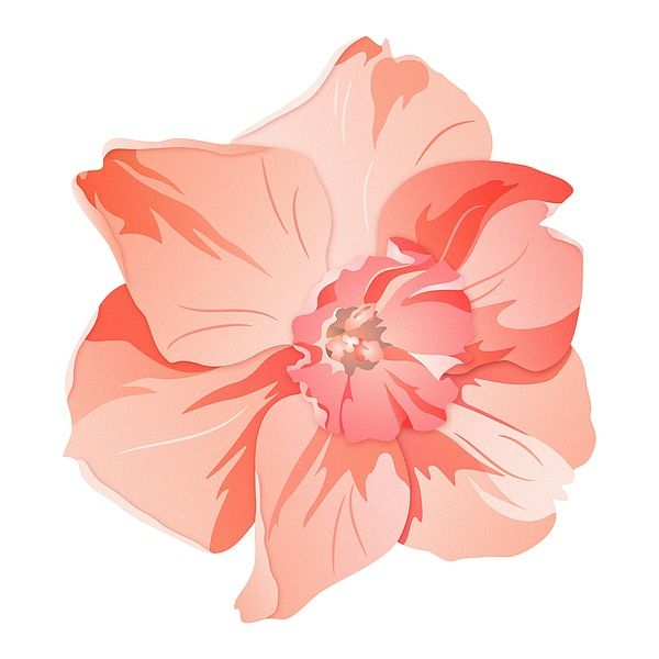 Delicate pink daffodil #artprints by @andersondesigns