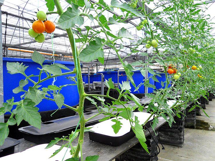 Plant Driven Feeding And Watering Systems Plants Aquaponics Aquaculture