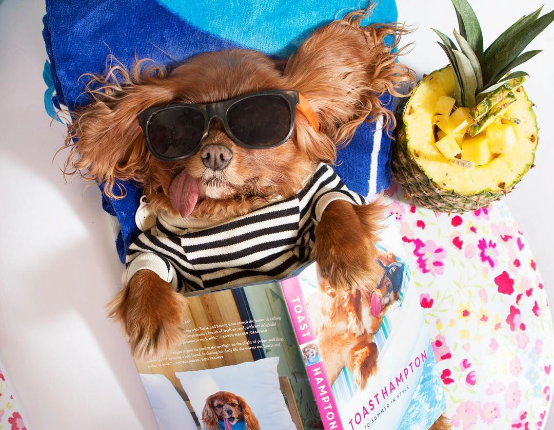 Toast the Dog Sunning in the Hamptons Is Giving Us Major Wanderlust from InStyle.com