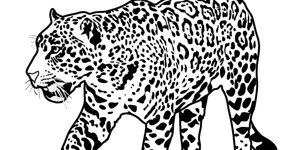 Printable Jaguar Coloring Pages Jaguar Coloring Pages Colouring Pages Of Jaguar Jag Football Coloring Pages Jaguar Animal Facts Kids Printable Coloring Pages