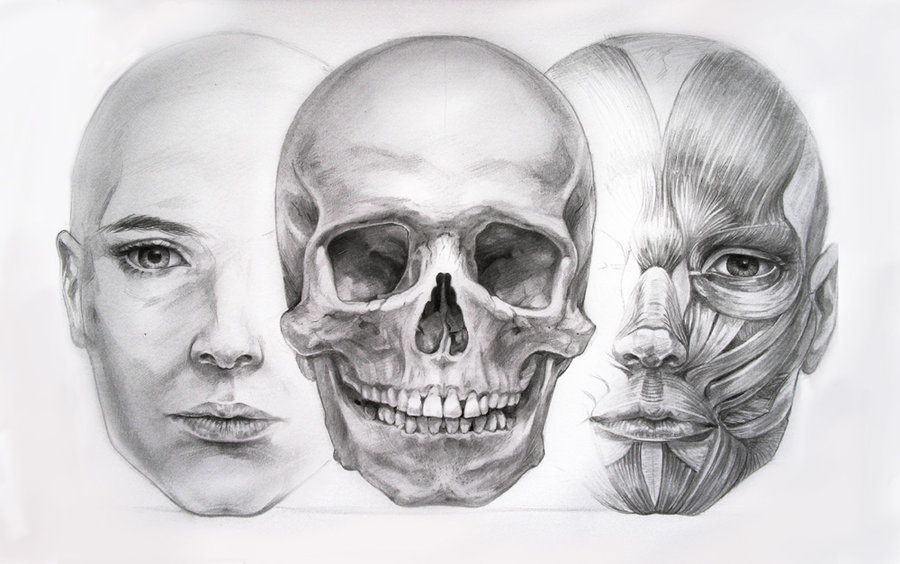 Facial Anatomy Study via DevianArt | Drawing Tutorials: Bones ...