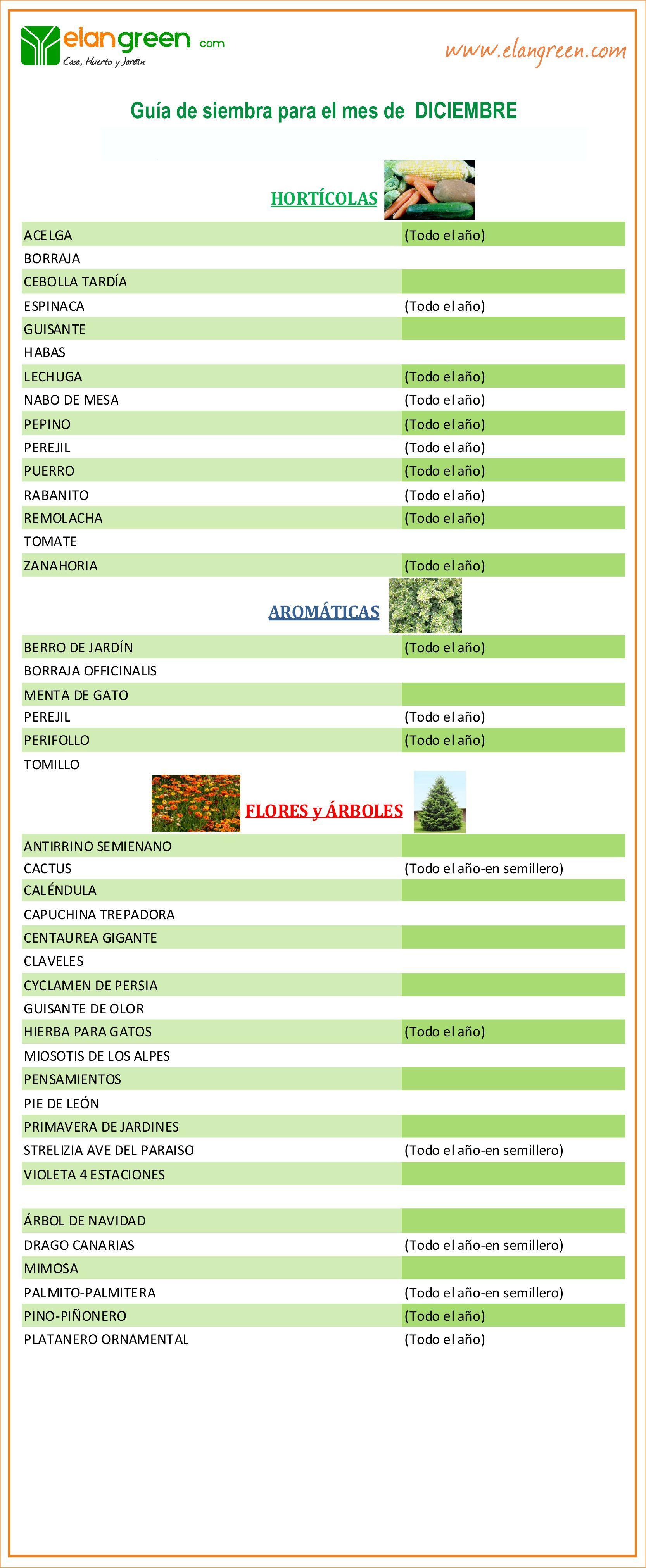 Guía De Siembra Mes De Diciembre Www Elangreen Com Siembras Hortícolas Borraja