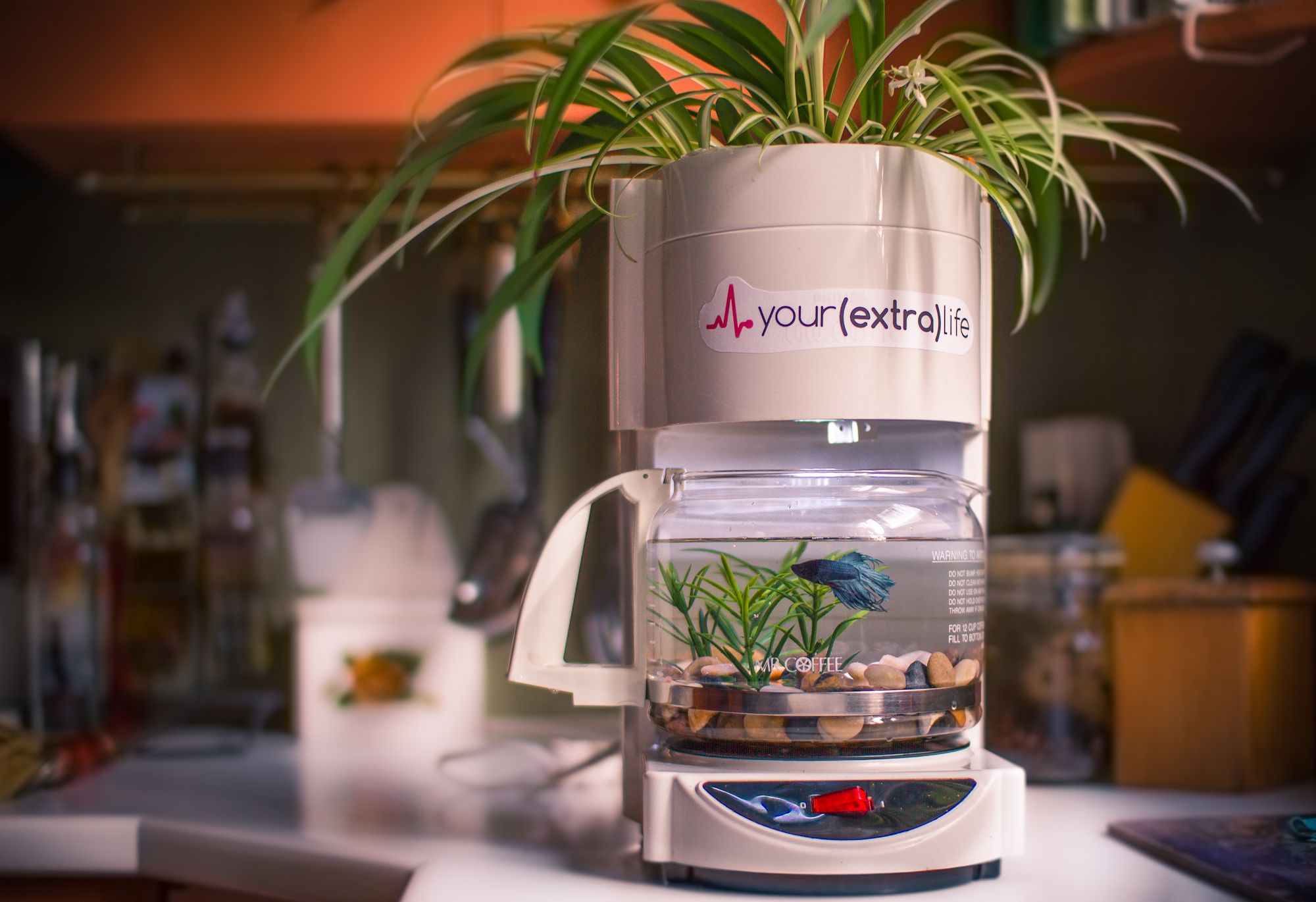 Repurposing old coffee machine repurposed has beta fish tank