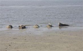Zeehonden weer vrij