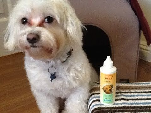 Dog Product Review Burt S Bees Tear Stain Remover Youtube