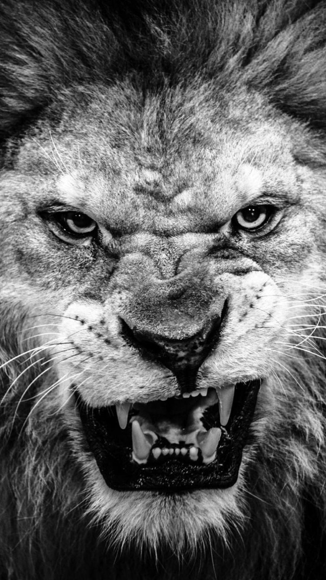 dark fierce lion face