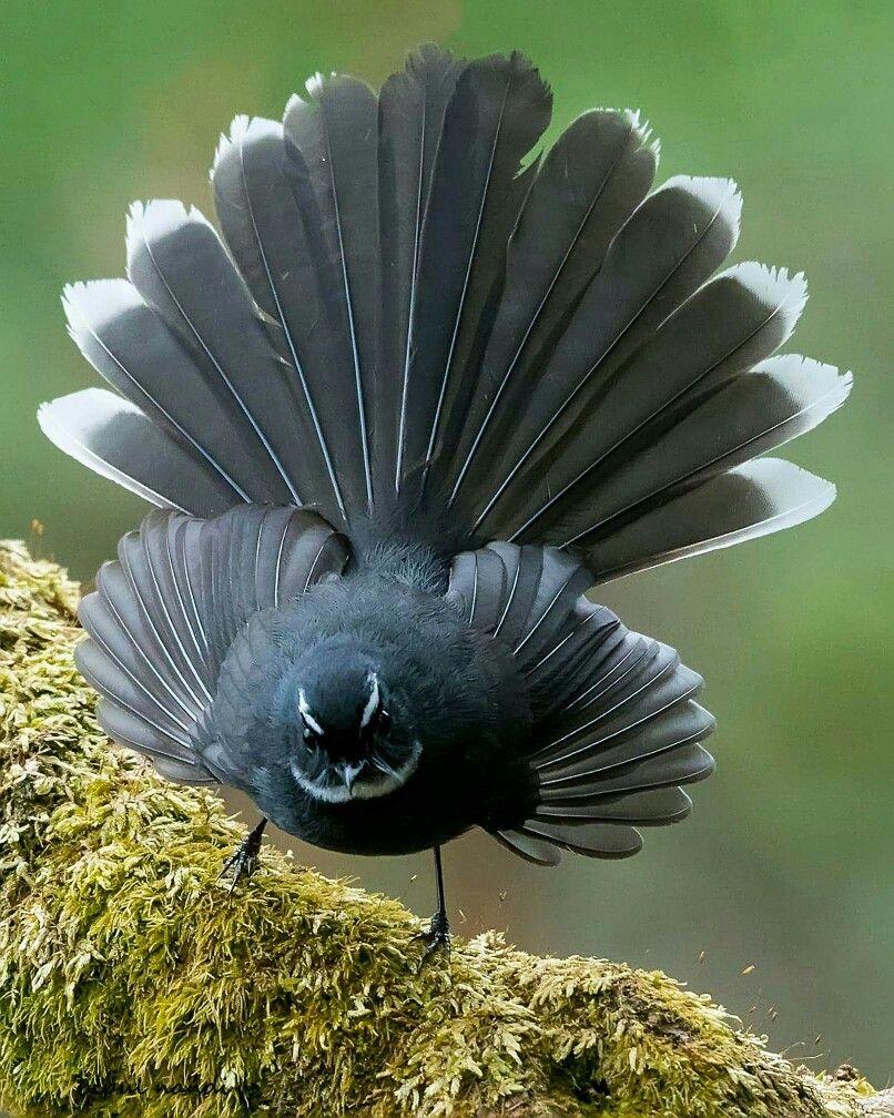 Идеальная фотография птица