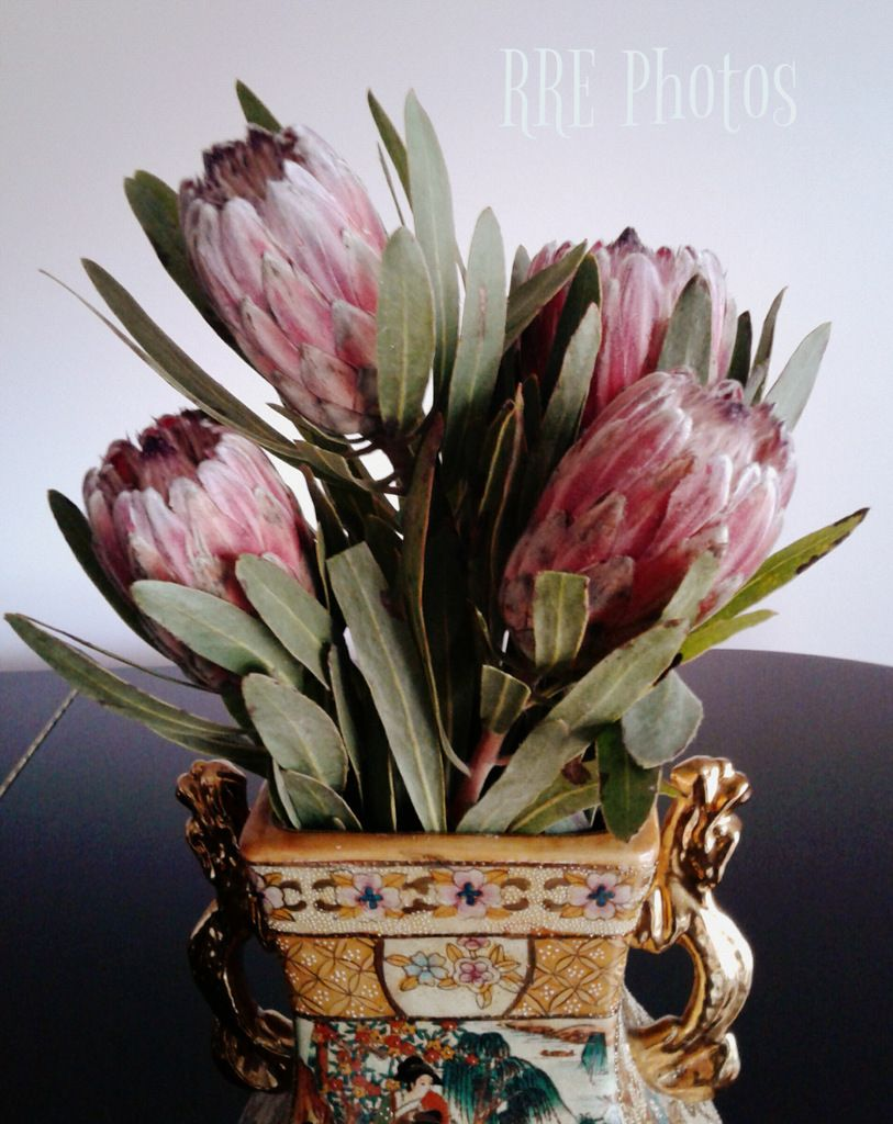 Protea from costco flowers pinterest flowers flowers protea from costco izmirmasajfo Images