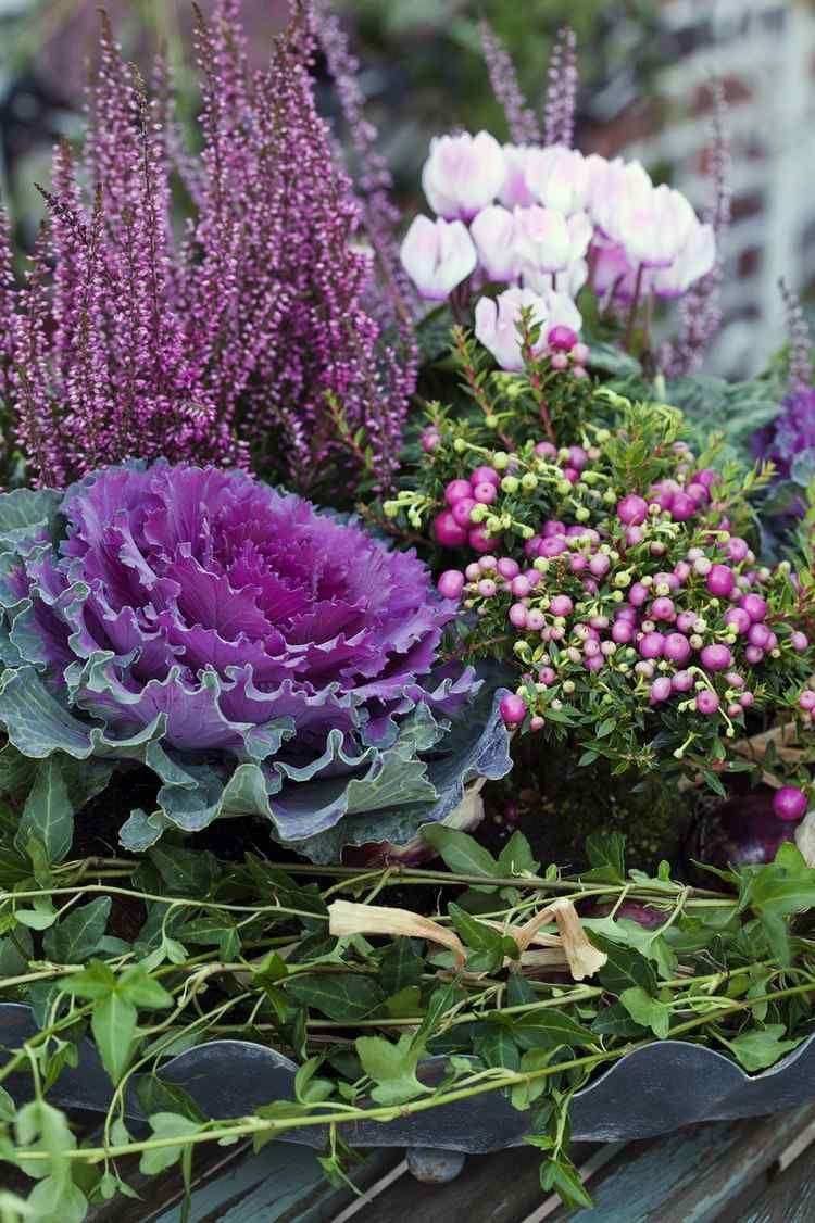 Zierkohl heidekraut scheinbeere und cyclamen detalles en el jardin pinterest herbst - Herbstdeko mit erika ...