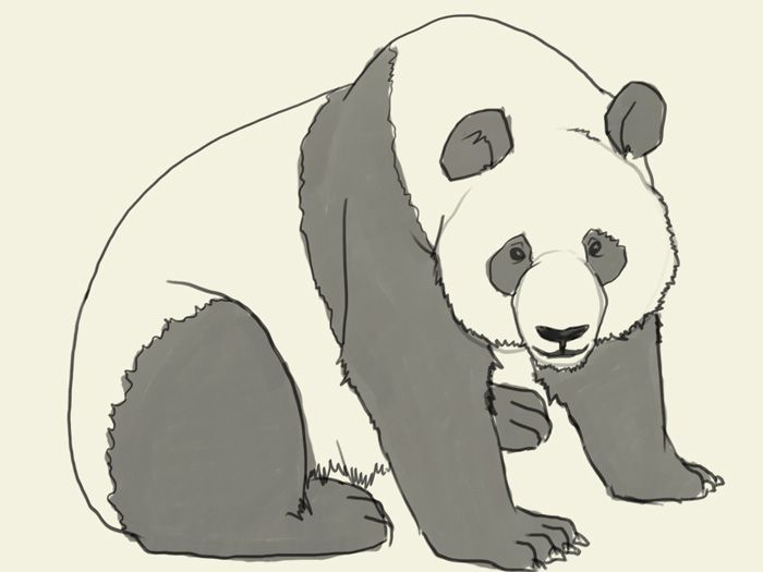 How To Draw Panda Bear Learn To Draw A Giant Panda Step By Step