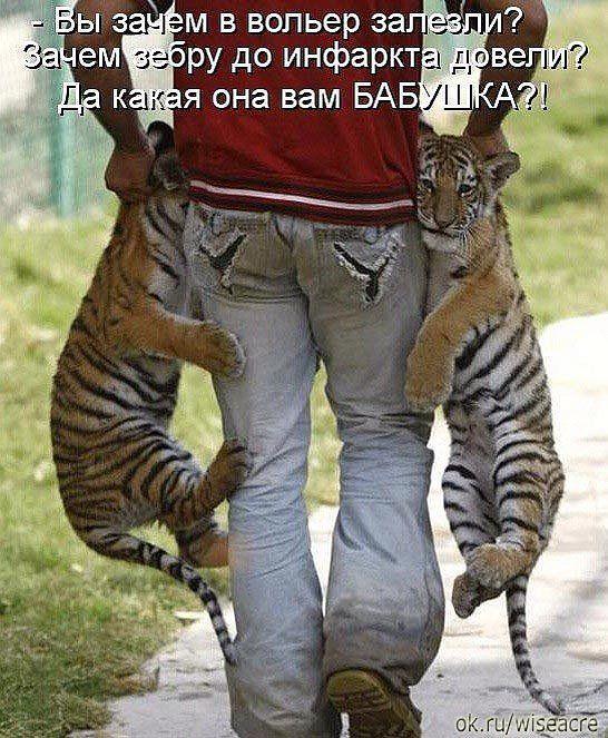 Редактировать описание   Смешные фотографии кошек, Шутки и ...