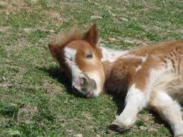 cute horses - Google Search