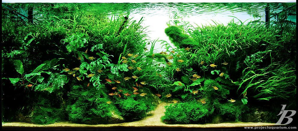 Planted Aquarium Tank Gallery -  3rd Rock - u0027Genesisu0027  ... & Planted Aquarium Tank Gallery -