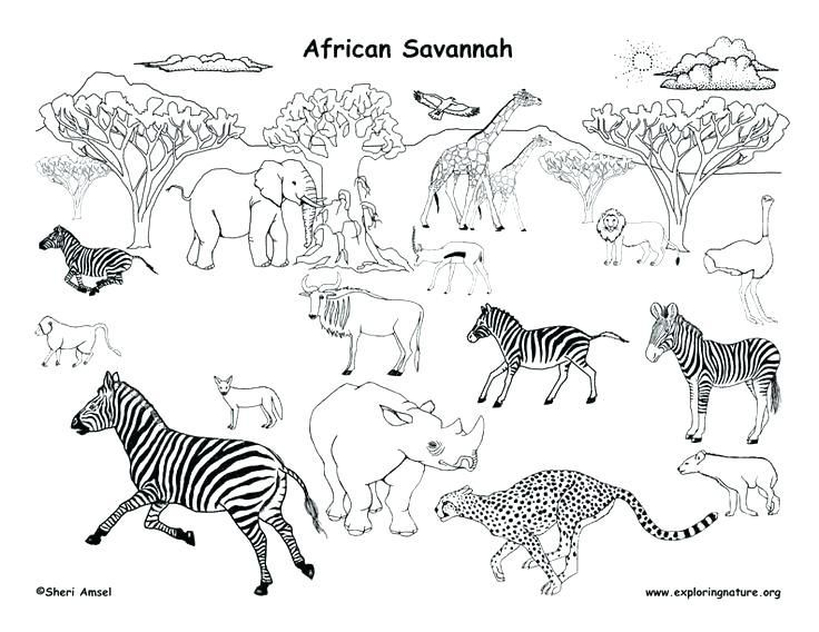 African Lion Safari Coloring Pages African Animals Animal Coloring Pages Animals