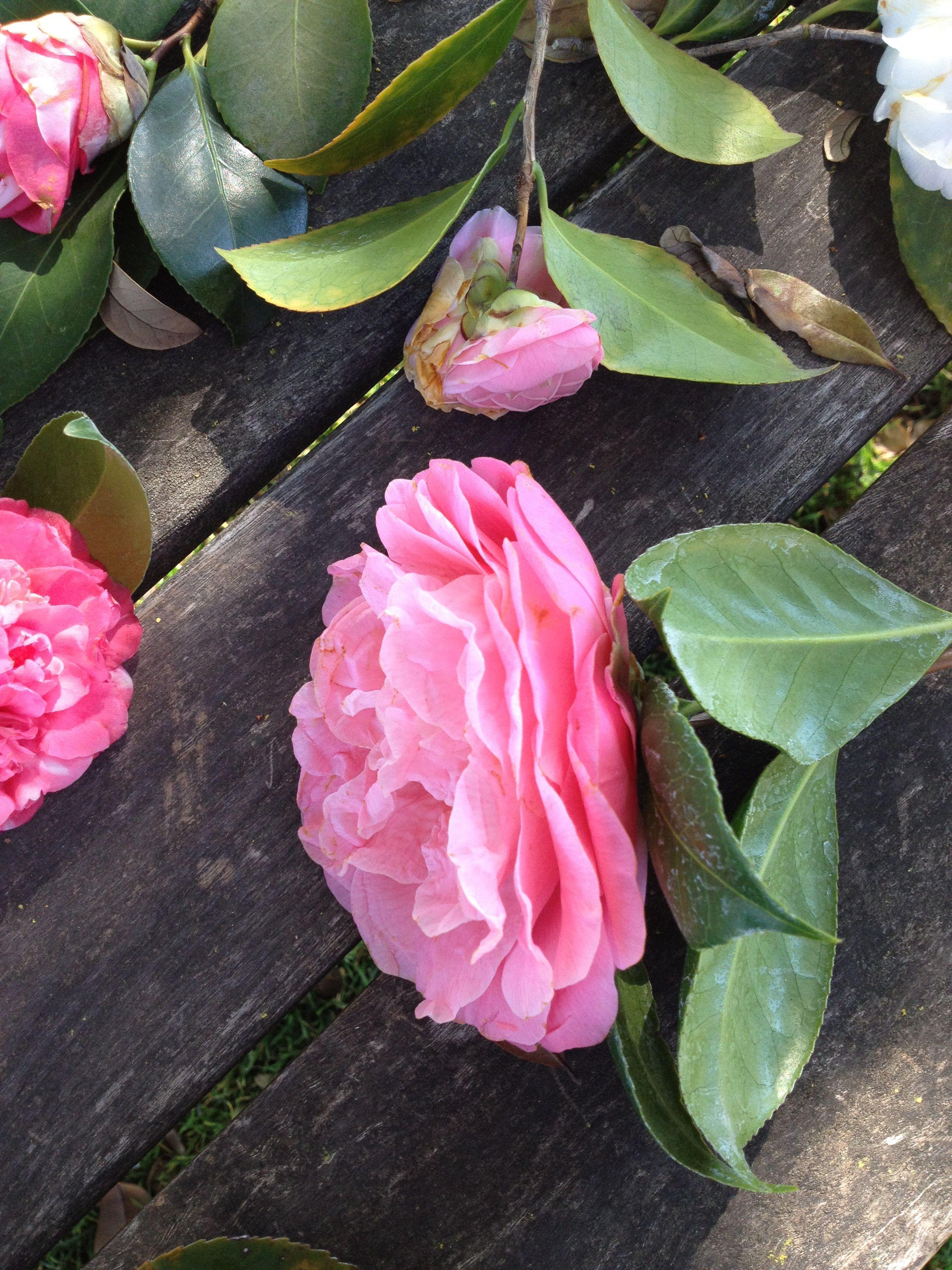 huntington garden blooms