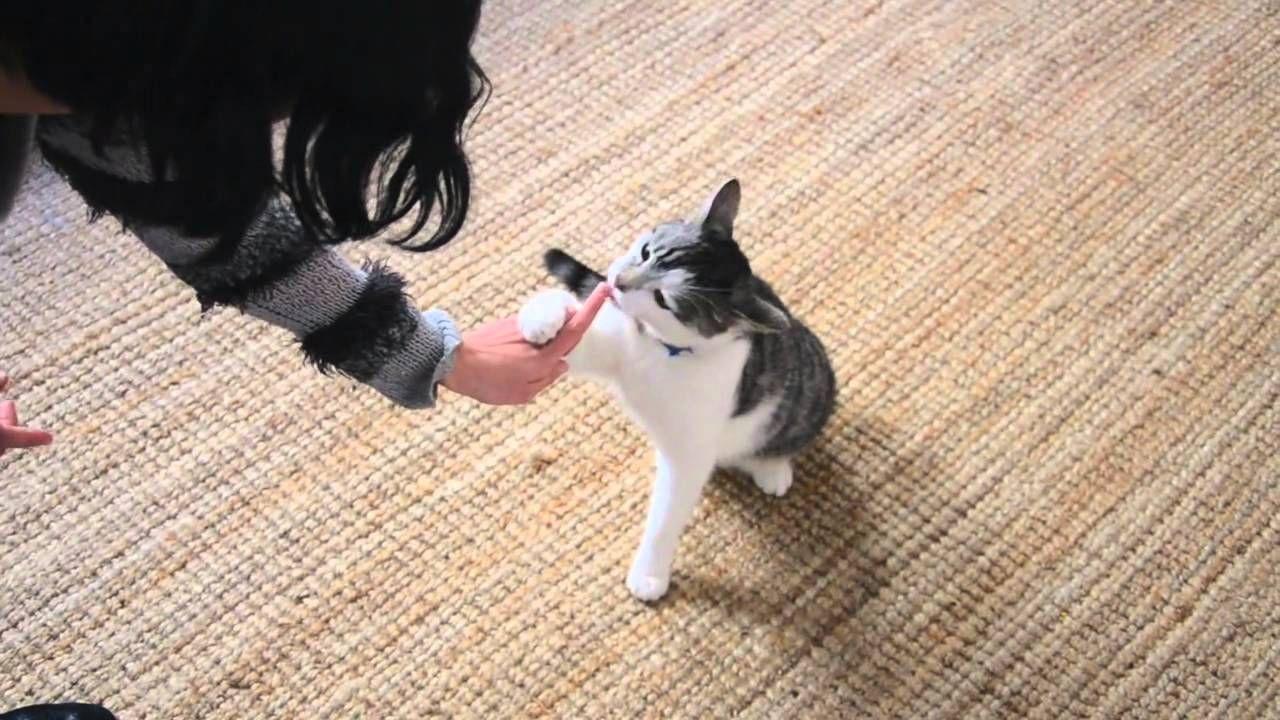 Wish cat swinging arm mechanism world
