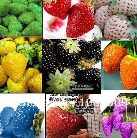 2100Pcs 30Kinds Superbig Climbing Strawberry Seeds 640 x 480