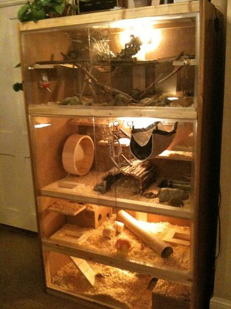 DIY cage (multi-leveled) for Rats etc. … | Rat cage, Degu ...