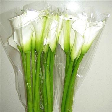 Calla Lily Avalanche 90cm Wholesale Flowers Florist Supplies Uk White Wedding Flowers Bouquet Flower Bouquet Wedding White Wedding Flowers