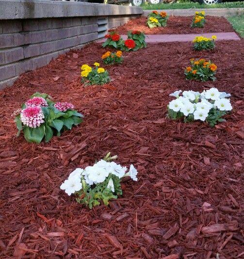 Magellan Zinnia White Petunia Marigolds Flower Bed Red Mulch