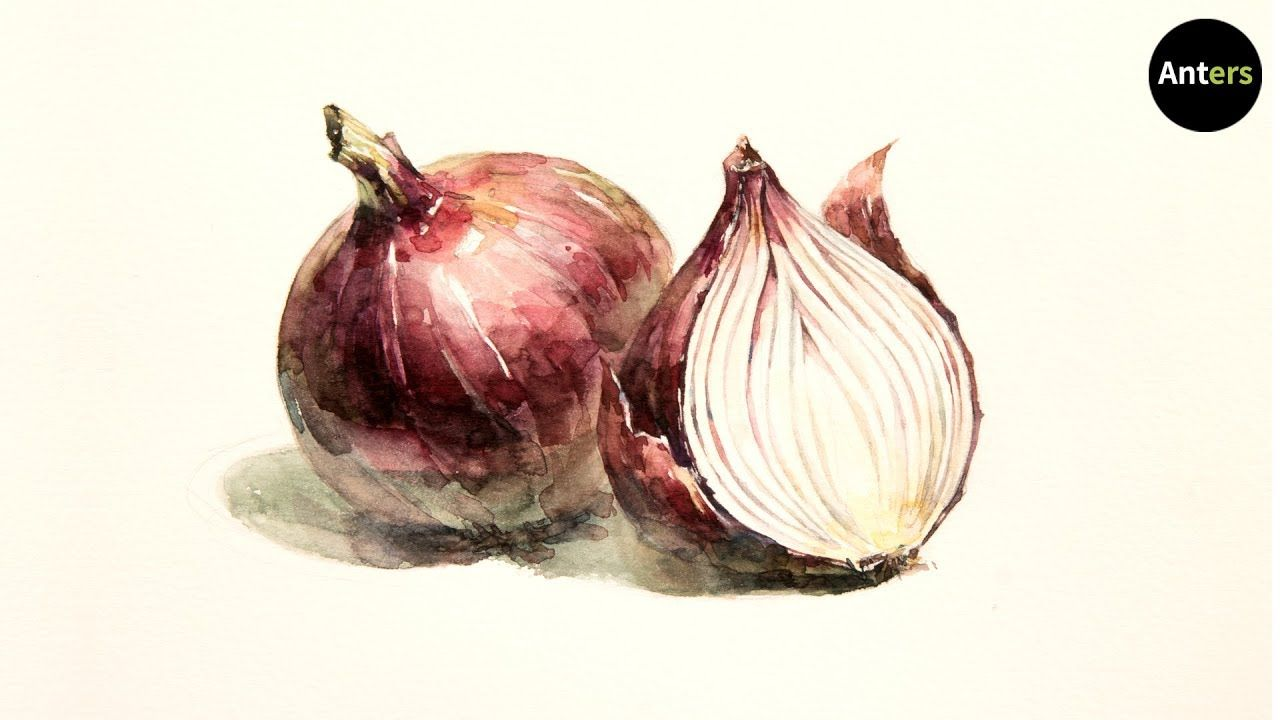 How To Draw Red Onion In Watercolor Youtube Onion Drawing