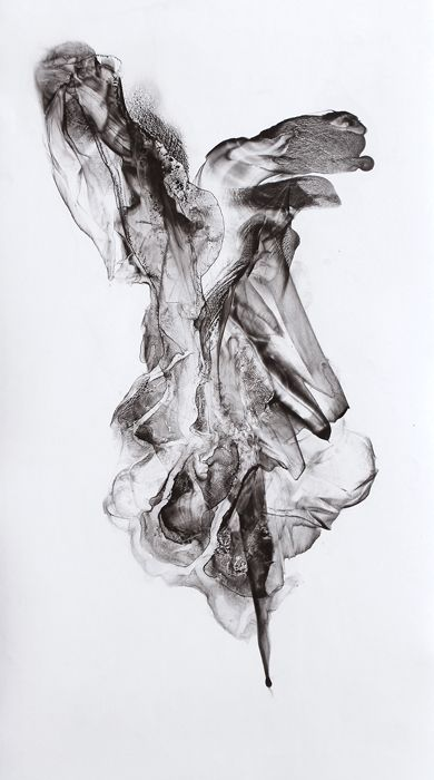 """Swag-Tail"" (Viscera 013) 2011 Ink and Graphite on Paper by Patti Jordan"