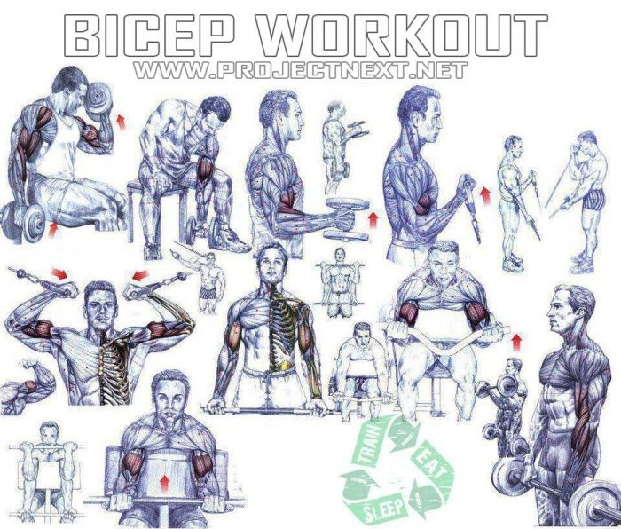 Bicep Workout - Healthy Fitness Exercises Gym Press Tricep - Yeah ...