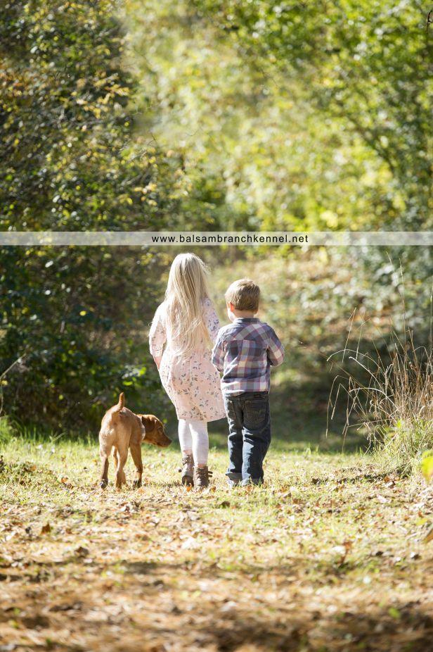 Teddy | Teeka & Duke | Balsam Branch Kennel | Puppy | Photoshoot | Now & Then Photography | Fox Red Labrador | Kids | teddy-fox-red-lab-puppy-4-months-old-balsam-branch-kennel-5-copy