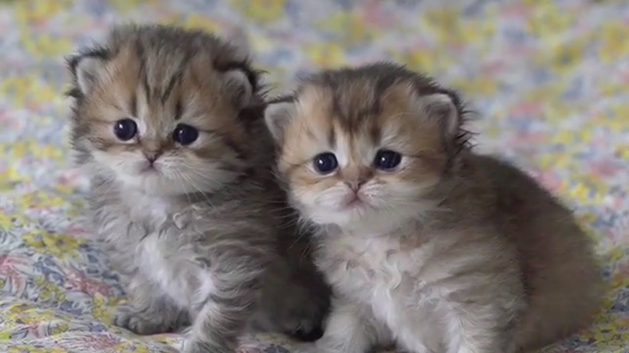 7 Reasons Why Your Cat Is Sneezing Cat Sneezes Are Very Cute A Kitten Wrinkles Its Nose And Here Are The Ti In 2020 Kittens Playing Cute Cats Photos Cute Baby Cats