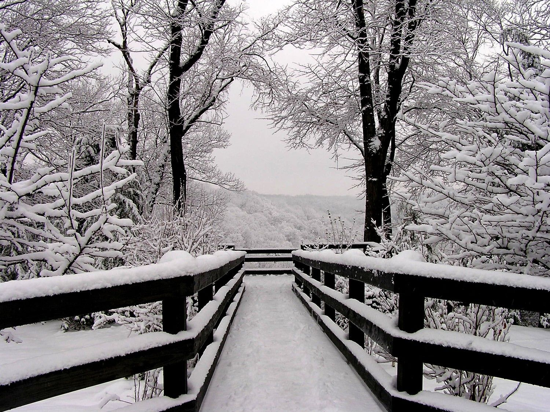 Winter Landscape Photograph 11x14 Black And White Photography Snowfall Symmetry 45 00 Via Etsy Winter Landscape Winter Photograph Landscape Photography