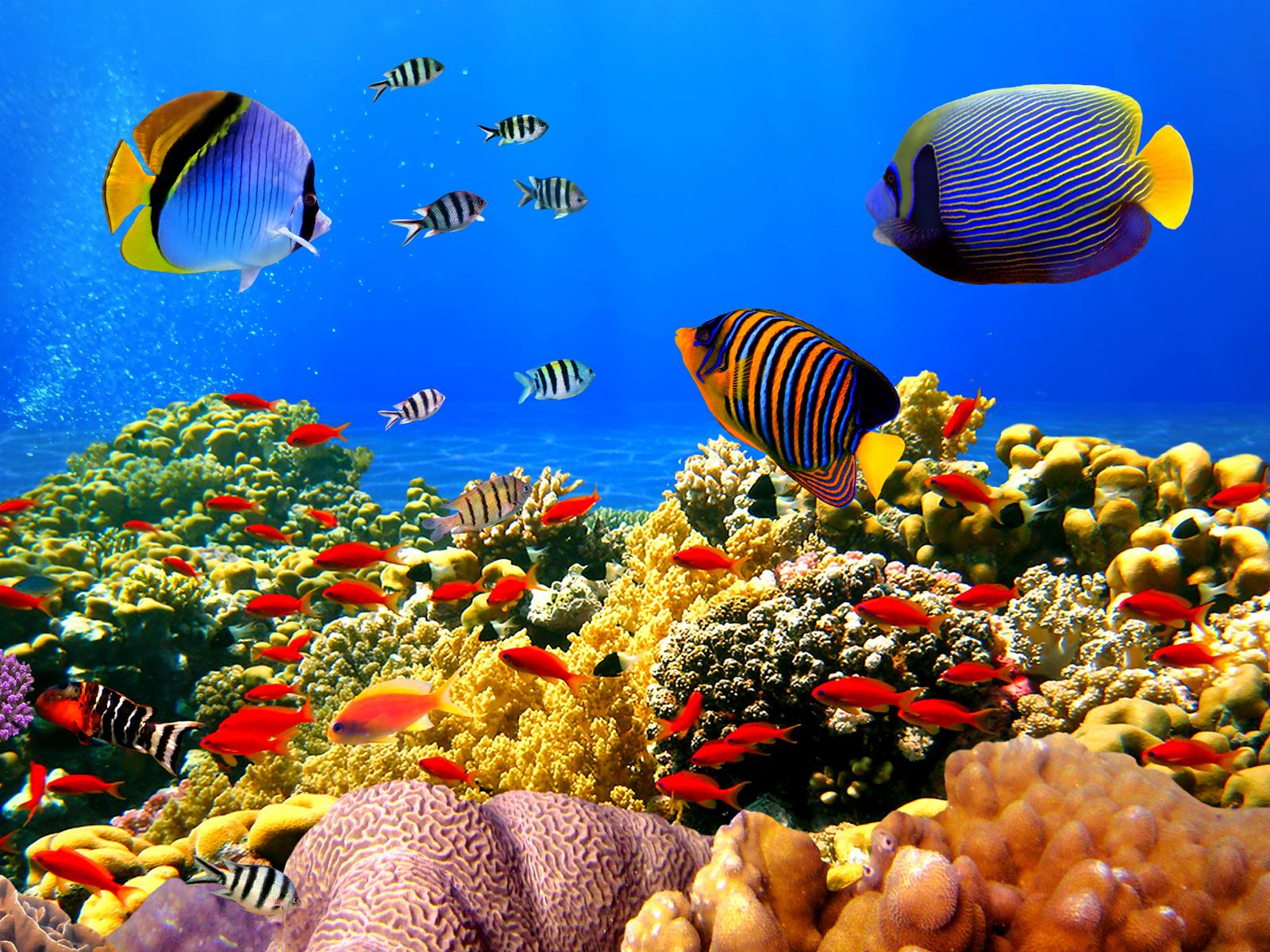 Pictures Of Ocean Fish Ledger Of Republican News Another Big Lie Conservative Fish Wallpaper Underwater Wallpaper Aquarium Live Wallpaper