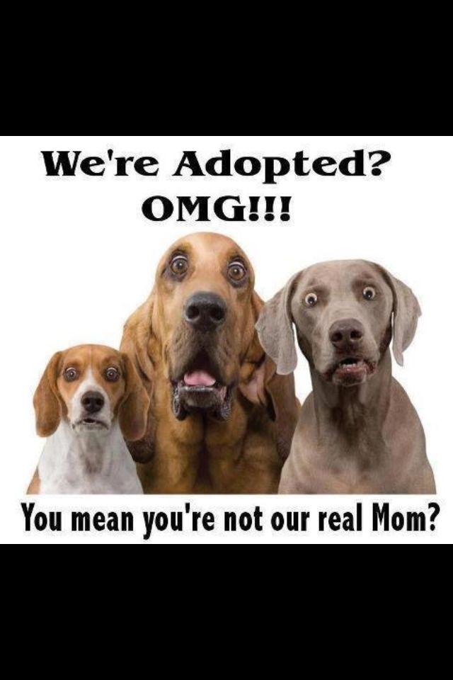 [7+] Adoptable Puppies Near Me At Breckenridge
