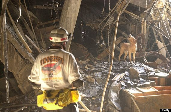Trained rescue dog Gus and his trainer Ed Apple from the Tennessee Task Force One Search & Rescue team searching for survivors in the wreckage at the Pentagon. (Photo by Mai/Mai/Time Life Pictures/Getty Images)
