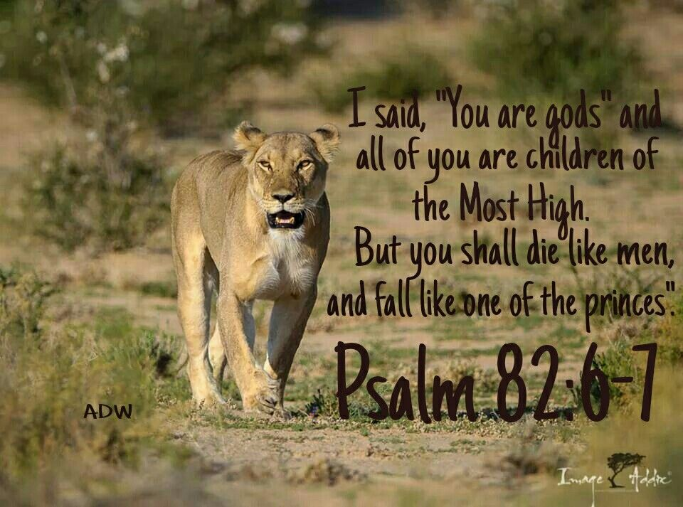 Ammco bus : Psalm 82 6 hebrew