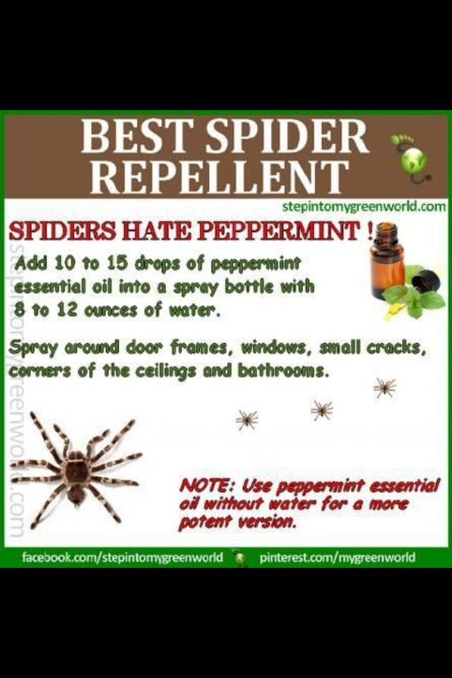 Spider Repellent With Images Spiders Repellent Natural Spider