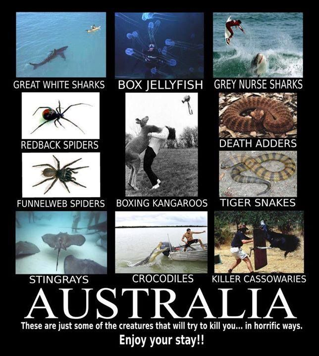 Animals In Australia That Can Kill You