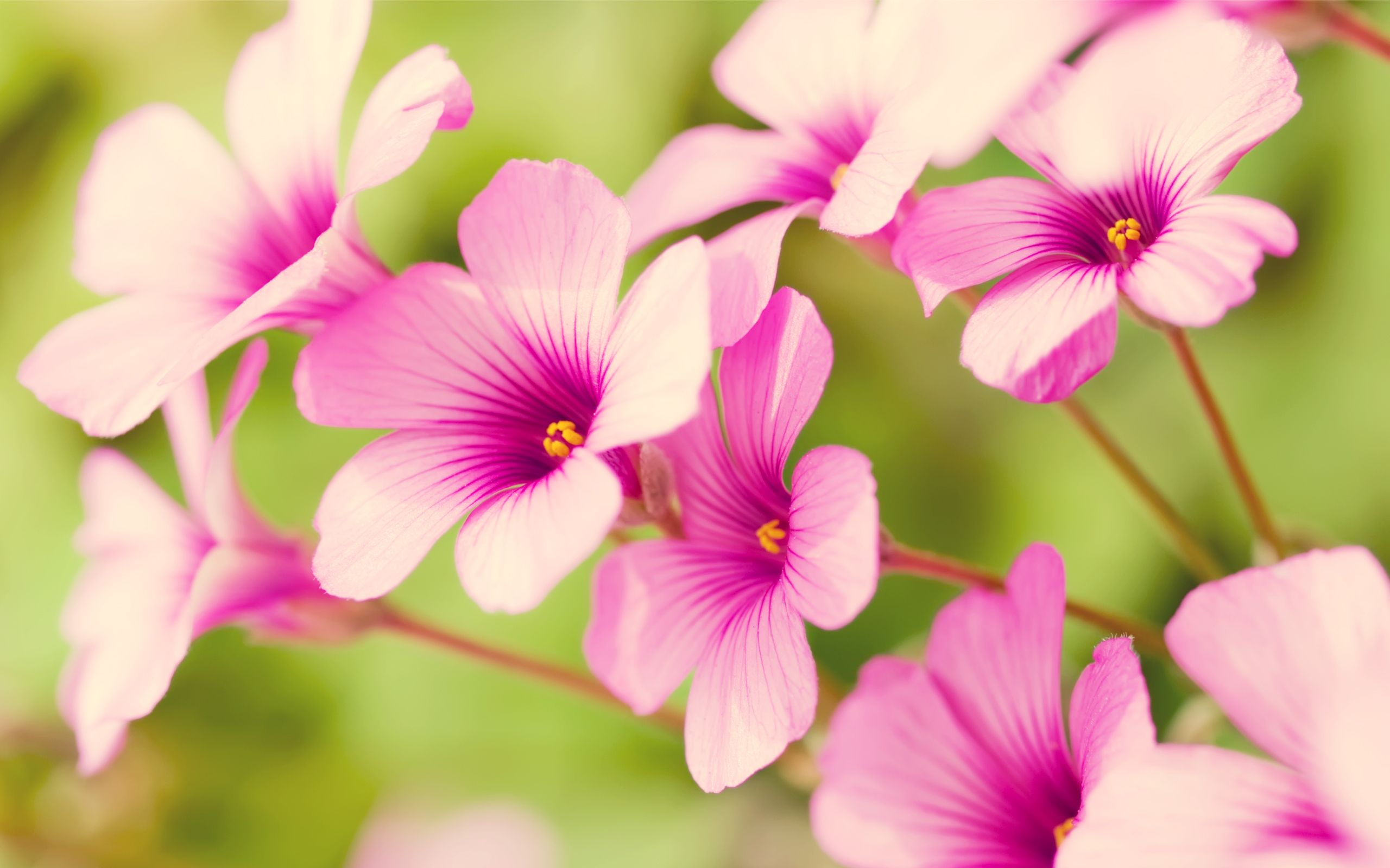 Pretty Flowers Free Wallpaper Of Flowers Pretty Purple